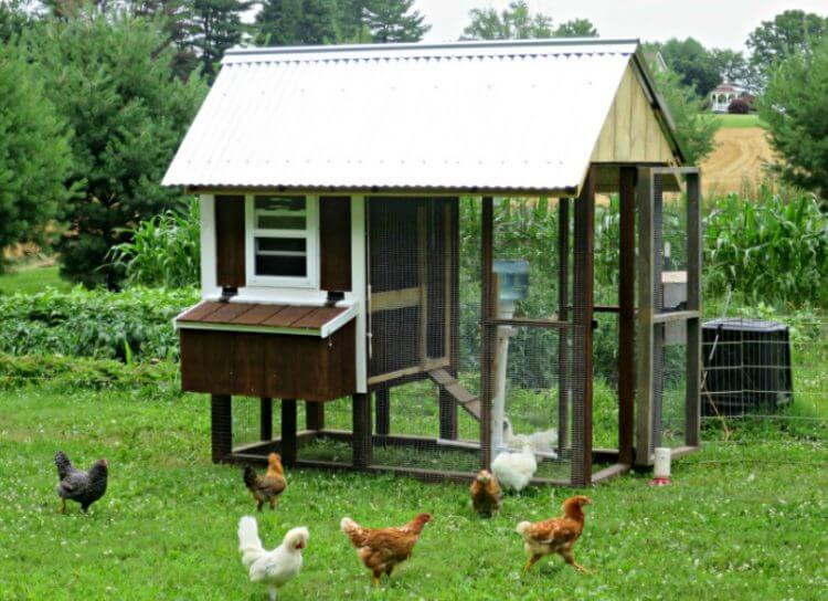 19 Outstanding Chicken Coop Ideas to Inspire You 6